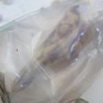 Embryo van een onbekend zeedier