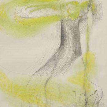 Boom, grafietstift en pastelkrijt, 50 x 65 cm, 2014